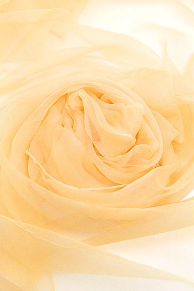 Seidenschal aus Chiffon 180 x 55 cm Cremegelb
