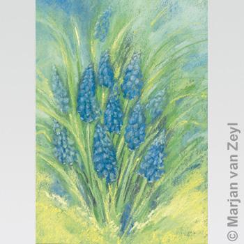 Postkarte Traubenhyazinthe
