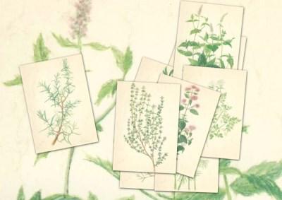 Kräutersortiment mit 10 Kunstkarten Anna Lübsee