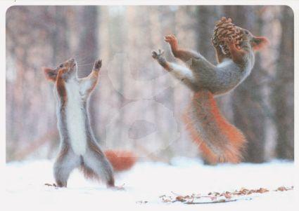 Postkarte* Eichhörnchen im Schnee