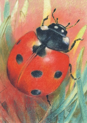 Kunstkarte * Marienkäfer